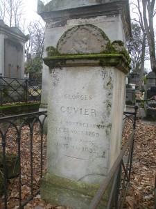 Cuvier (1)